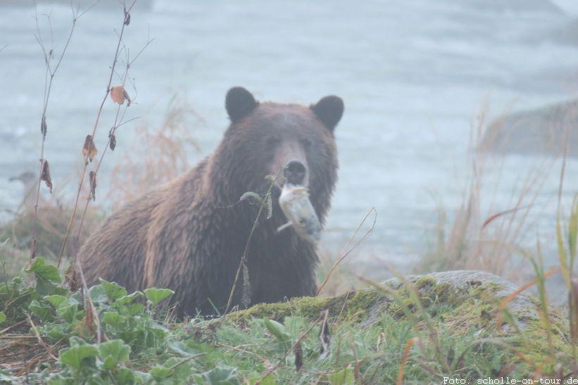 Bear_001_web