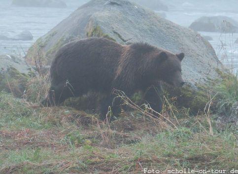 Bear_002_web