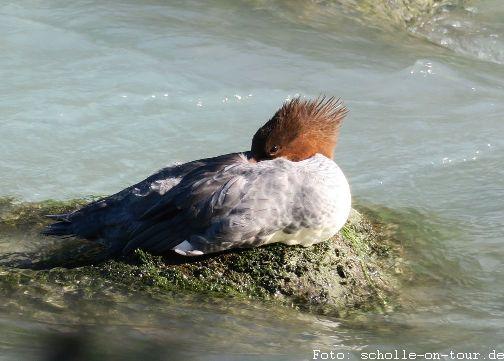 Duck_002_web