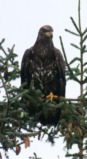 Eagle_001_web