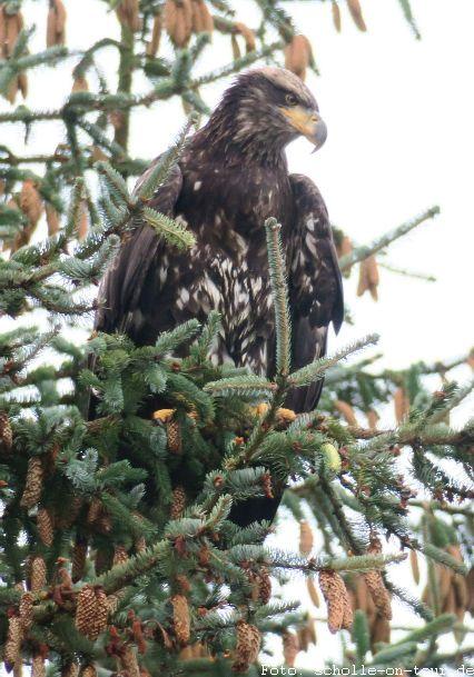 Eagle_002_web